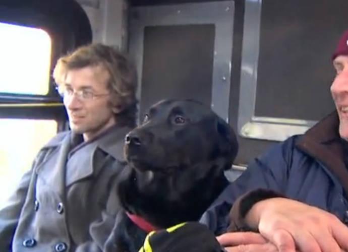 Resultado de imagen para eclipse seattle dog