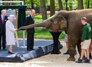 Queen Elizabeth and Prince Philip visit the new elephant centre at ZSL Whipsnade Zoo (Image: Getty)