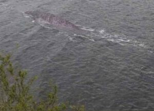 Photos The Loch Ness Monster 'Spotting' Trend On Social Media, Some Suggest They're Photoshopped