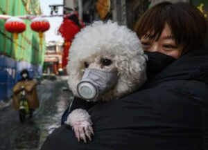 BEIJING, CHINA - FEBRUARY 07: A Chinese woman holds her dog that is wearing a protective mask as well as they stand in the street on February 7, 2020 in Beijing, China. The number of cases of a deadly new coronavirus rose to more than 31000 in mainland China Friday, days after the World Health Organization (WHO) declared the outbreak a global public health emergency. China continued to lock down the city of Wuhan in an effort to contain the spread of the pneumonia-like disease which medical experts have confirmed can be passed from human to human. In an unprecedented move, Chinese authorities have put travel restrictions on the city which is the epicentre of the virus and municipalities in other parts of the country affecting tens of millions of people. The number of those who have died from the virus in China climbed to over 636 on Friday, mostly in Hubei province, and cases have been reported in other countries including the United States, Canada, Australia, Japan, South Korea, India, the United Kingdom, Germany, France and several others. The World Health Organization has warned all governments to be on alert and screening has been stepped up at airports around the world. Some countries, including the United States, have put restrictions on Chinese travellers entering and advised their citizens against travel to China. (Image: Getty)