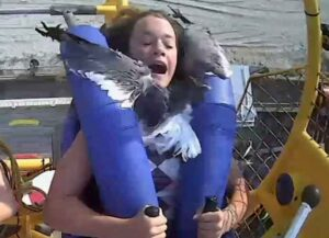 Seagull Hits Teenage Girl In Face During 75 M.P.H. Slingshot Ride In New Jersey (Image: YouTube)
