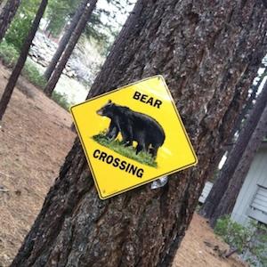 South Lake Tahoe Visitor's Center Warns Visitors To Stop Taking Bear Selfies